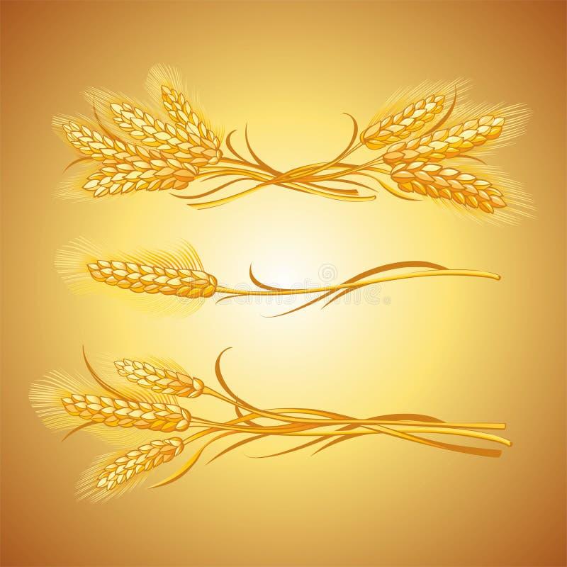 Orelhas do trigo  fotografia de stock royalty free