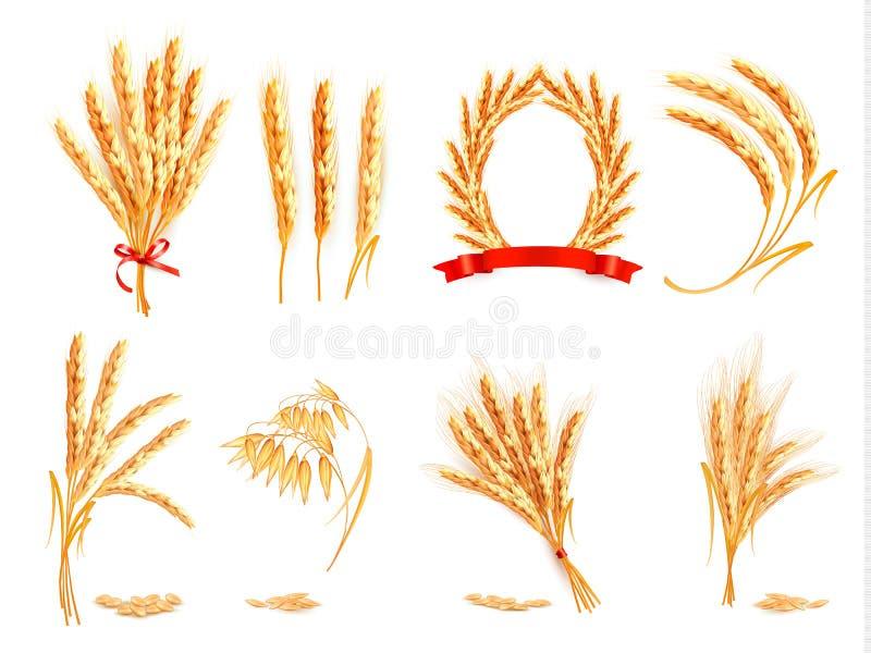 Orelhas do trigo, da aveia, do centeio e da cevada ilustração do vetor