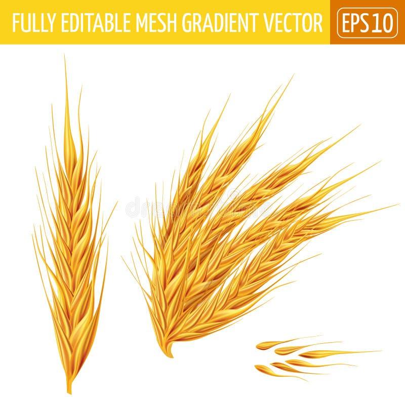 orelhas do trigo no fundo branco Ilustração do vetor ilustração do vetor