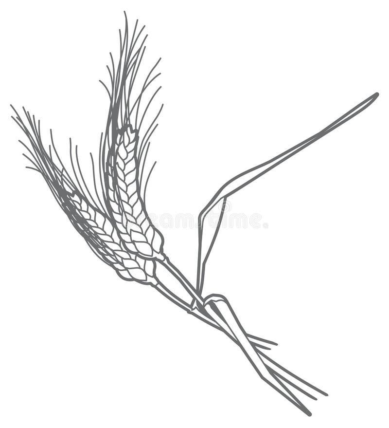 Orelhas do vetor do centeio ilustração stock
