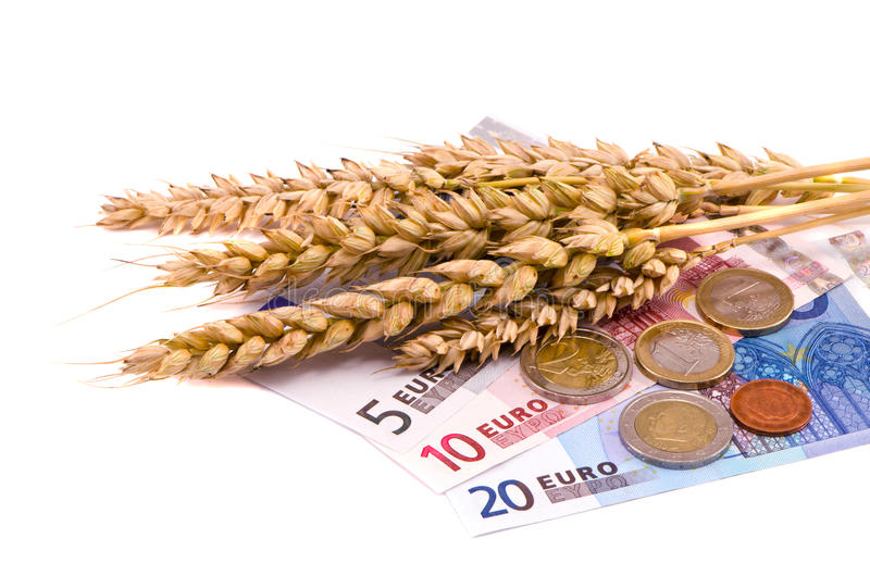Orelhas e euro isolados da colheita dos trigos imagens de stock royalty free