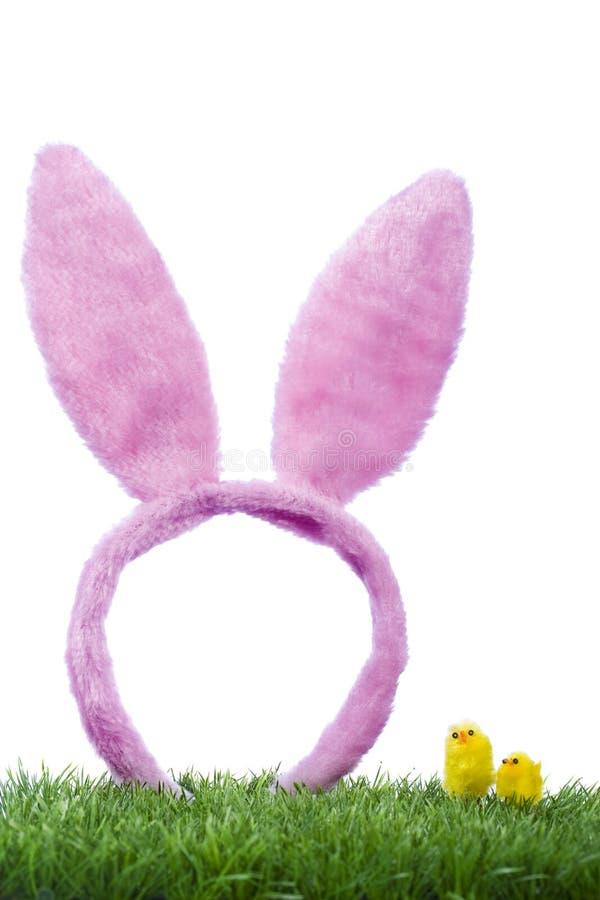 Orelhas e pintainho engraçados de coelho fotos de stock