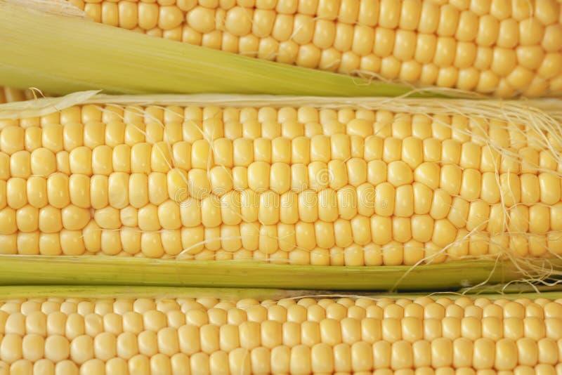 Oren van maïs met rijen van pitten en zijdeclose-up stock foto