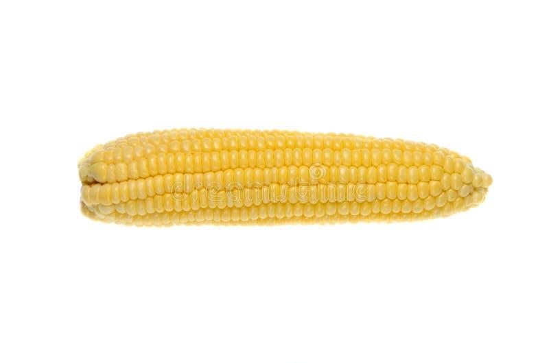 Oren van suikermaïs op witte achtergrond wordt geïsoleerd die stock fotografie