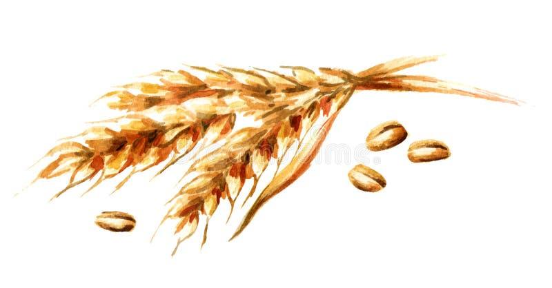 Oren van tarwe en zaden Waterverfhand getrokken die illustratie, op witte achtergrond wordt geïsoleerd stock illustratie