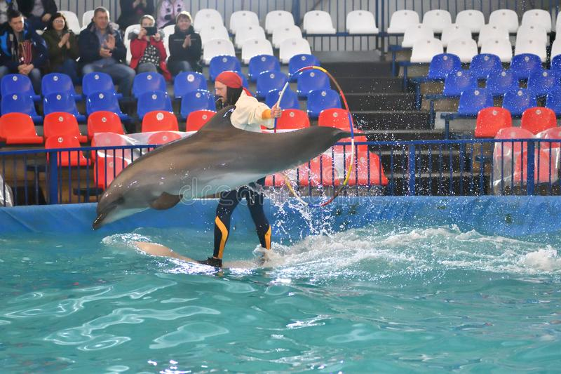 Orenburg, Russia - November 8, 2017 year: show dolphins in the Dolphinarium stock photography