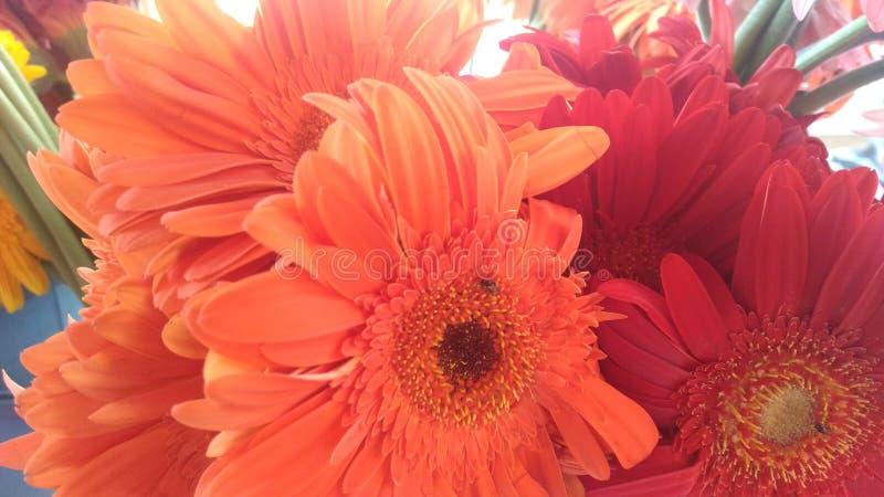Orenge en rwd bloem in het park stock afbeelding