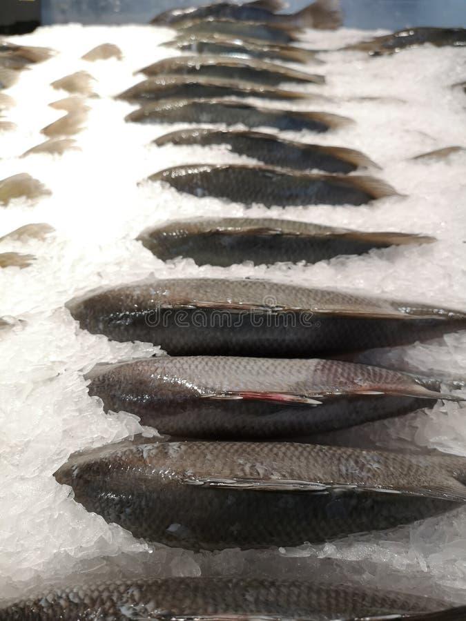 Oreochromisniloticus fishs, vers voor het koken van Plaats op ijsstapels in de diepvriezer in de supermarkt royalty-vrije stock foto