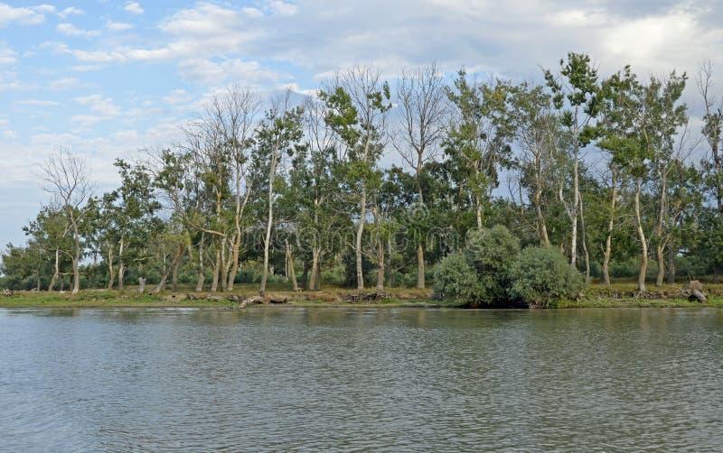 Orest Sulina delta Danube obrazy stock