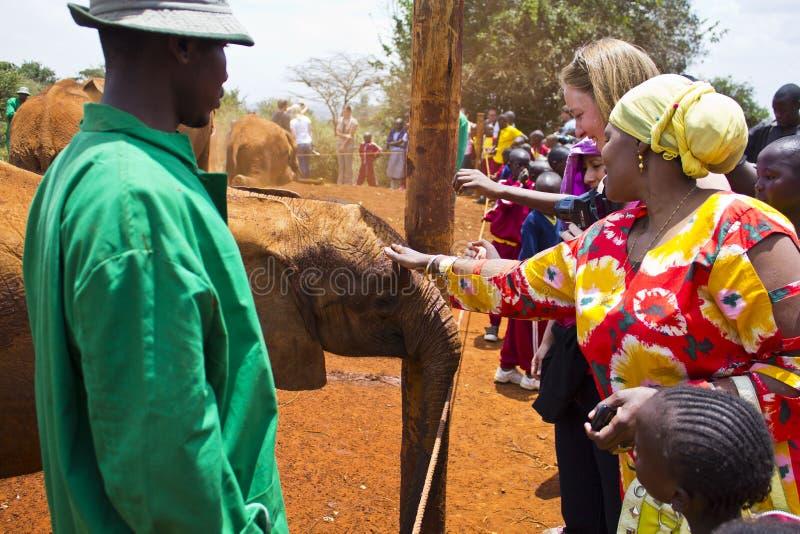 Orfanato do elefante do bebê fotos de stock royalty free