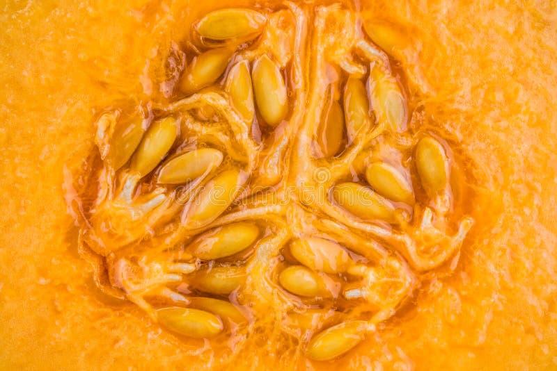 Orgánico fresco una mitad del melón anaranjado del cantalupo foto de archivo