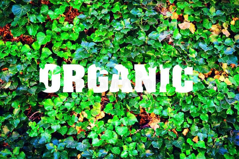 Orgánico, inscripción contra la perspectiva de las hojas verdes Producto natural fotos de archivo