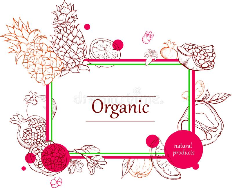 Orgalic tło z tropikalnych owoc sylwetką ilustracja wektor