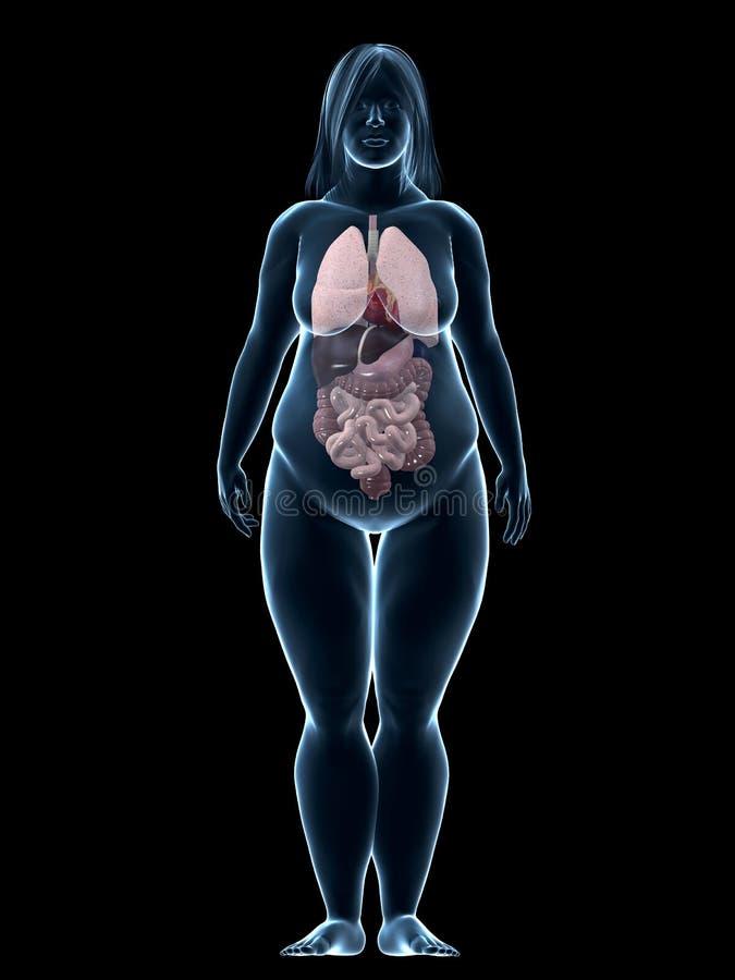 organów nadwaga kobieta ilustracja wektor
