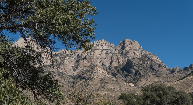 The Organ Mountains and a desert tree. royalty free stock images