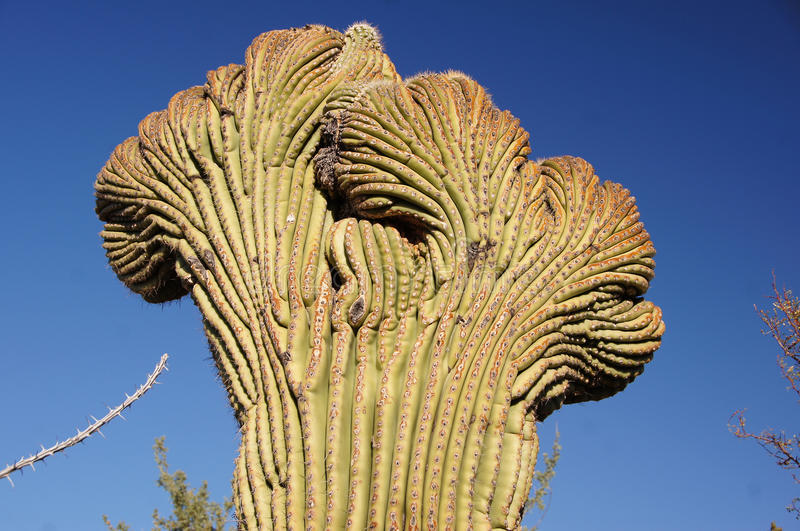 Organ Pipe Cactus National Monument, Arizona, USA. Organ Pipe Cactus National Monument is a U.S. National Monument and UNESCO biosphere reserve located in stock images