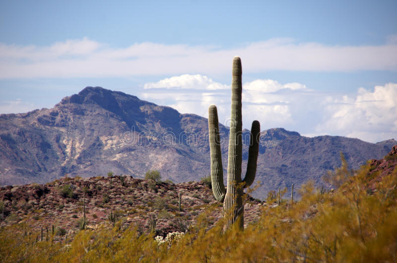 Organ Pipe Cactus National Monument, Arizona, USA. Organ Pipe Cactus National Monument is a U.S. National Monument and UNESCO biosphere reserve located in stock image