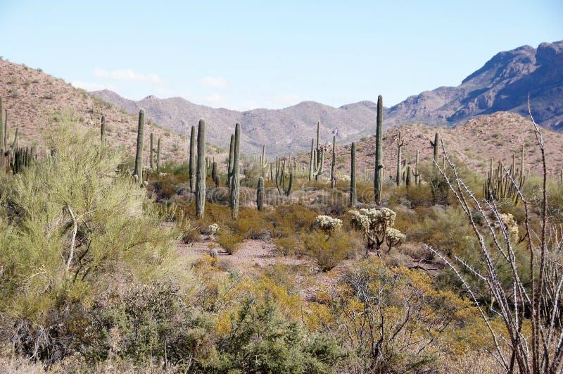 Organ Pipe Cactus National Monument, Arizona, USA. Organ Pipe Cactus National Monument is a U.S. National Monument and UNESCO biosphere reserve located in stock photos