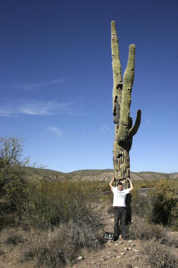 Free Organ Pipe National Park, Arizona - Large Cactus Carnegiea Gigantea In Desert Royalty Free Stock Photos - 135940018