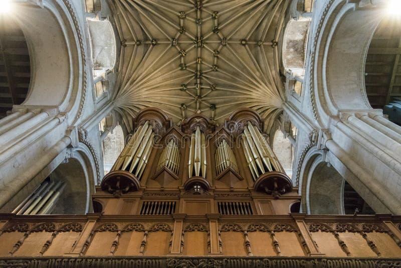 Organ & tak, Norwich domkyrka, UK royaltyfri foto