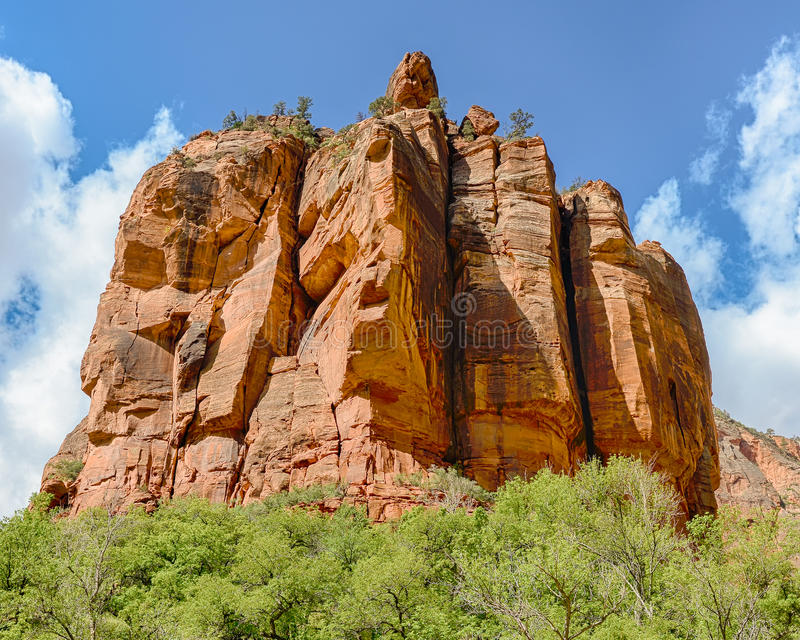 The Organ, Zion National Park, Utah. High Achievers; Trees perched on top of The Organ in the Big Bend area of Zion National Park, Utah stock photography