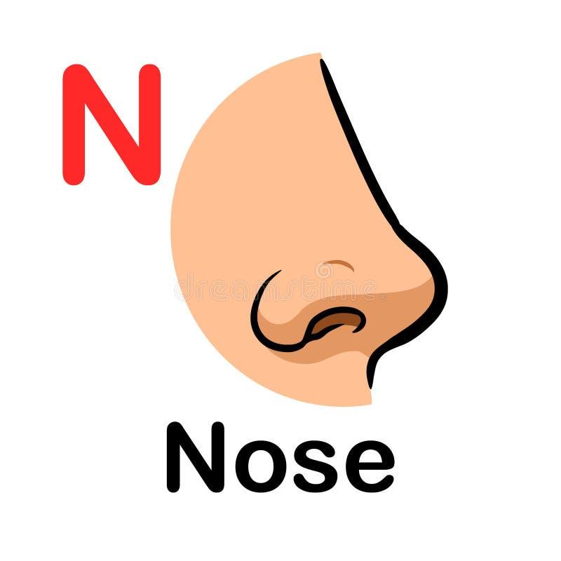Organe d'odeur humaine, nez images stock