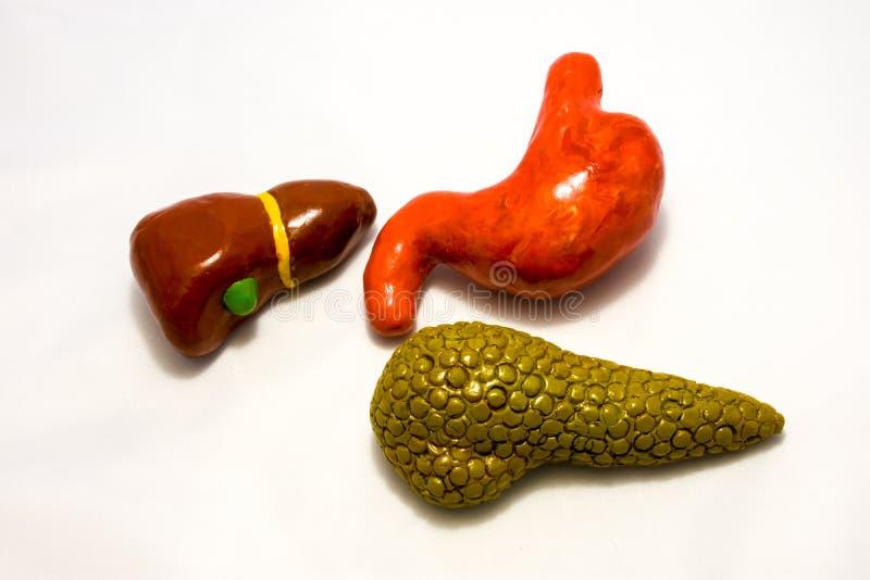 Organen van maagdarmkanaal: maag, lever, gallbladder en alvleesklier Conceptenfoto van anatomische structuur van het hogere pari royalty-vrije stock afbeelding