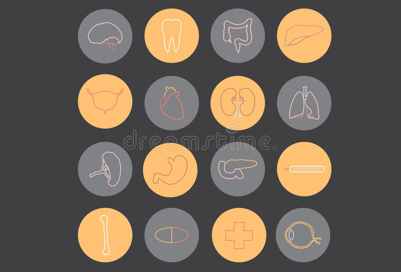 Organes humains - médecine image stock