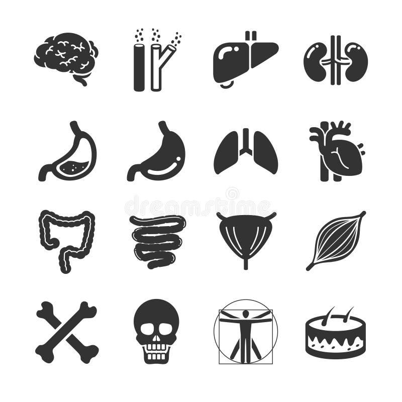 Organi umani illustrazione di stock