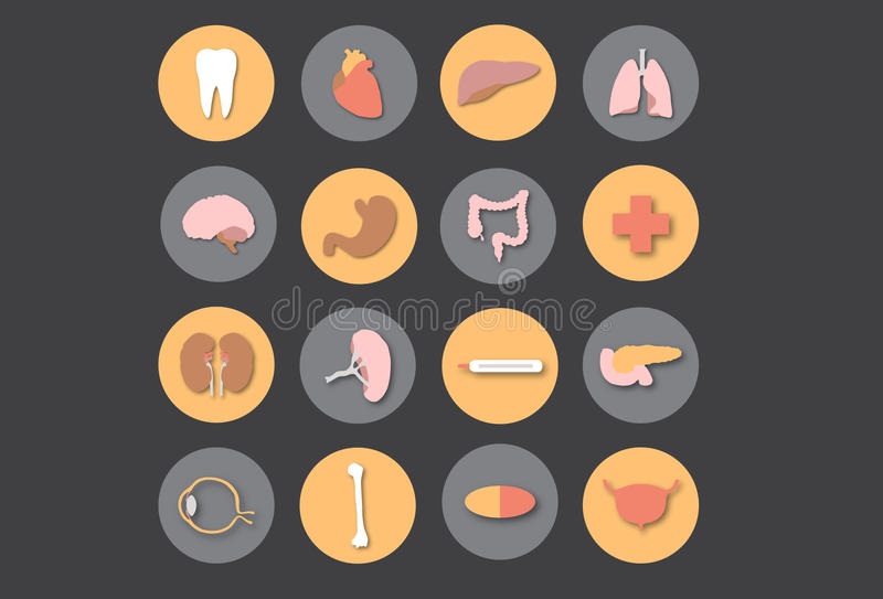 Organi umani - medicina