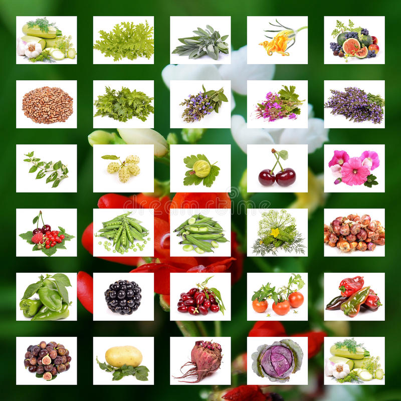 Organic Agriculture. Organic Food concept. Collage of fresh vegetables royalty free illustration