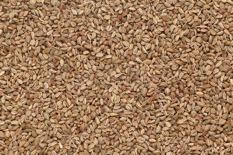Organic Ajwain. royalty free stock images