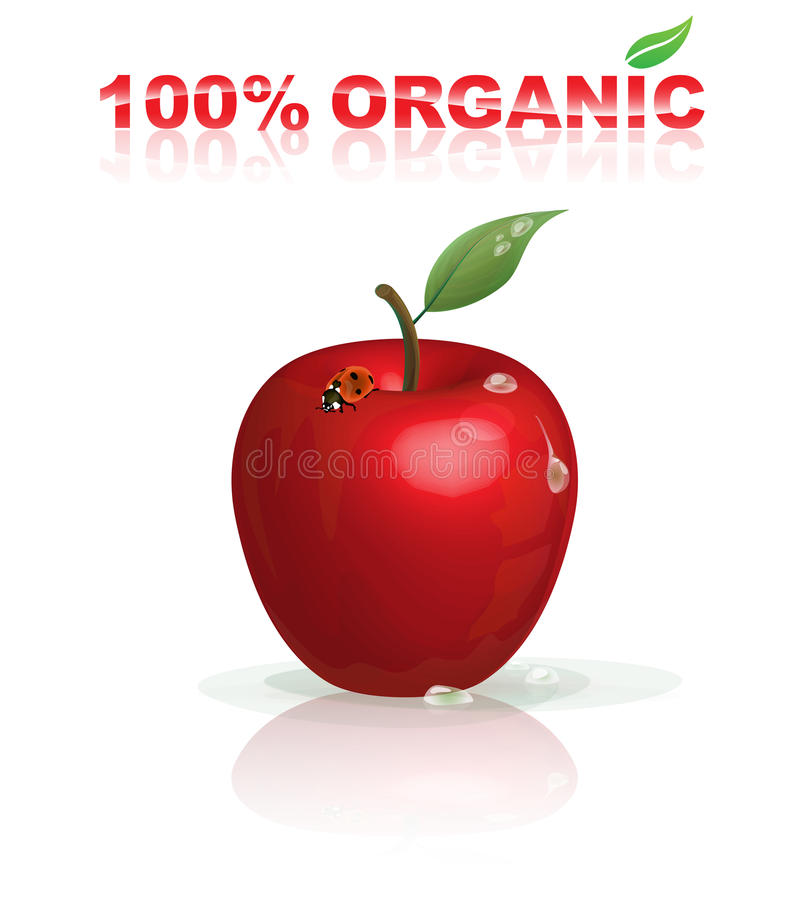 Download Organic apple stock vector. Image of nutrition, freshness - 20978071