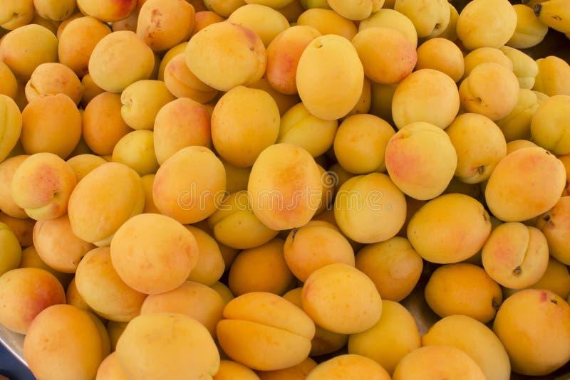 Organic apricot. The group of organic apricot royalty free stock photo