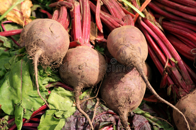 Organic Beetroot stock photo