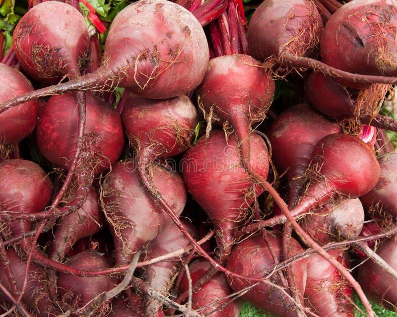 Organic Beets royalty free stock photos