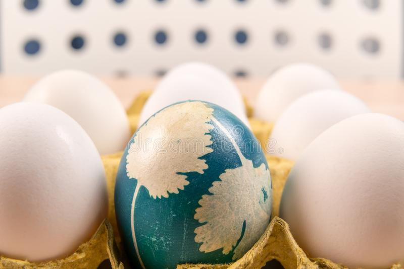 A organic blue easter egg standing in middle of the white eggs, easter holiday decorations, easter concept backgrounds royalty free stock image