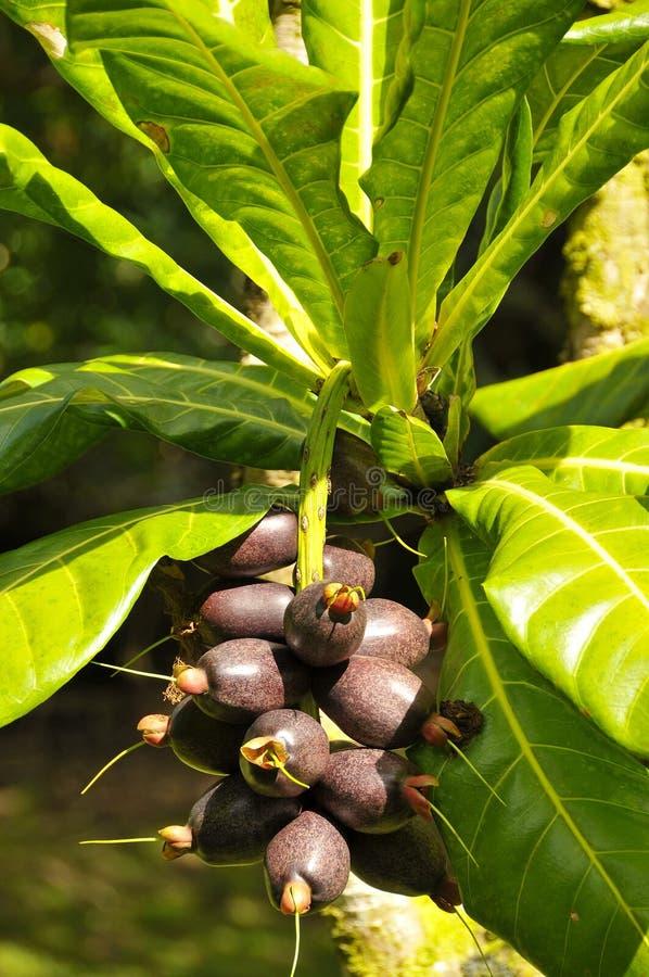 Organic Brazilian Nuts stock photos