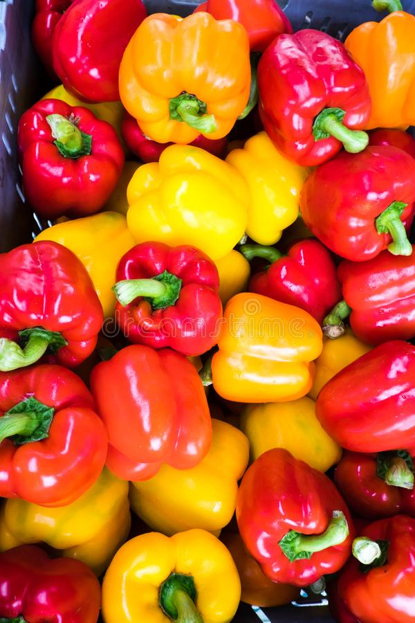 Organic capsicums or bell peppers - red and yellow colors stock image