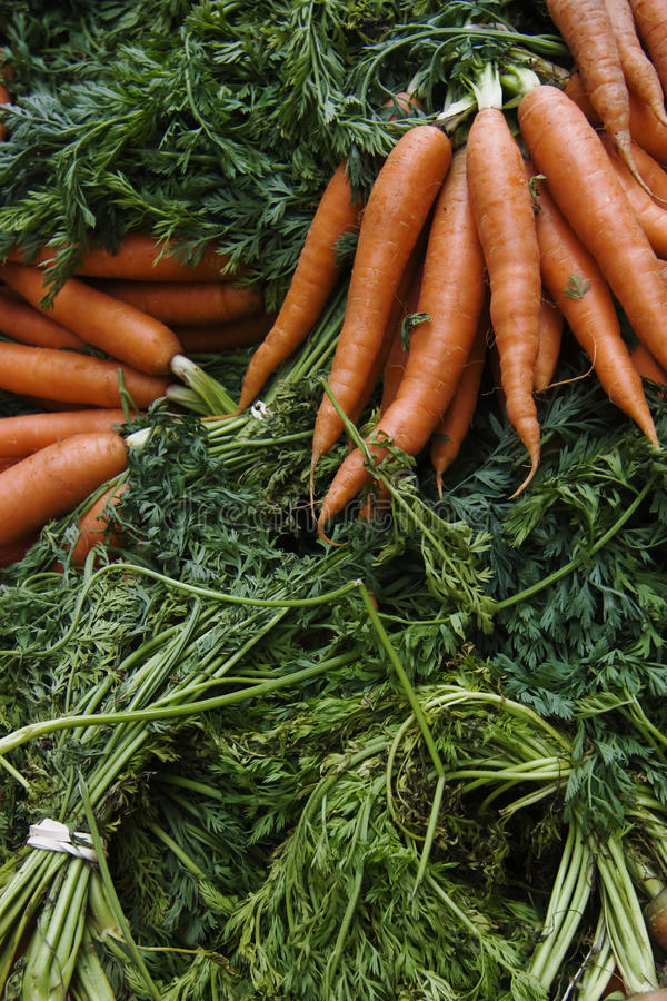 Download Organic Carrots stock image. Image of root, freshness - 14648503