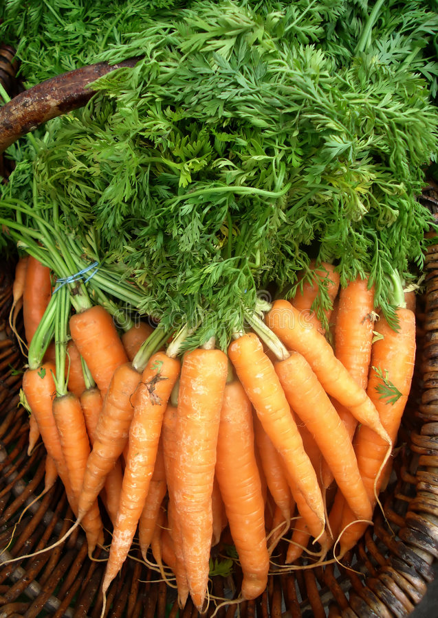 Download Organic Carrots stock photo. Image of agriculture, orange - 5742062