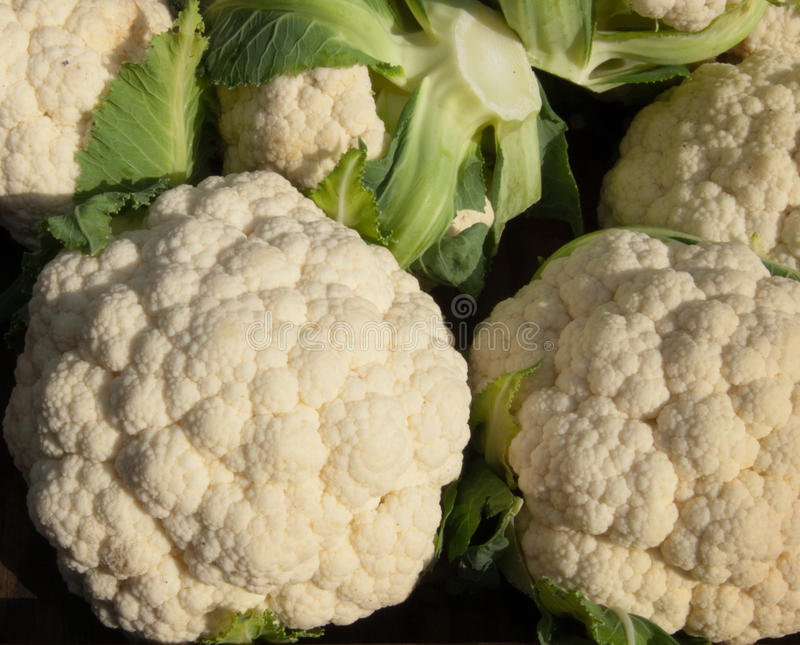 Organic Cauliflower royalty free stock photo