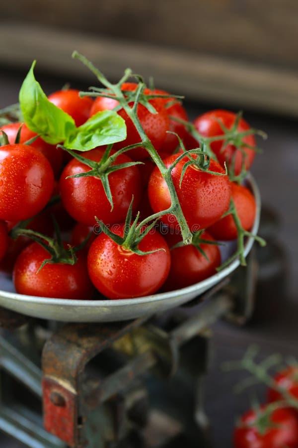 Organic cherry tomatoes royalty free stock photo