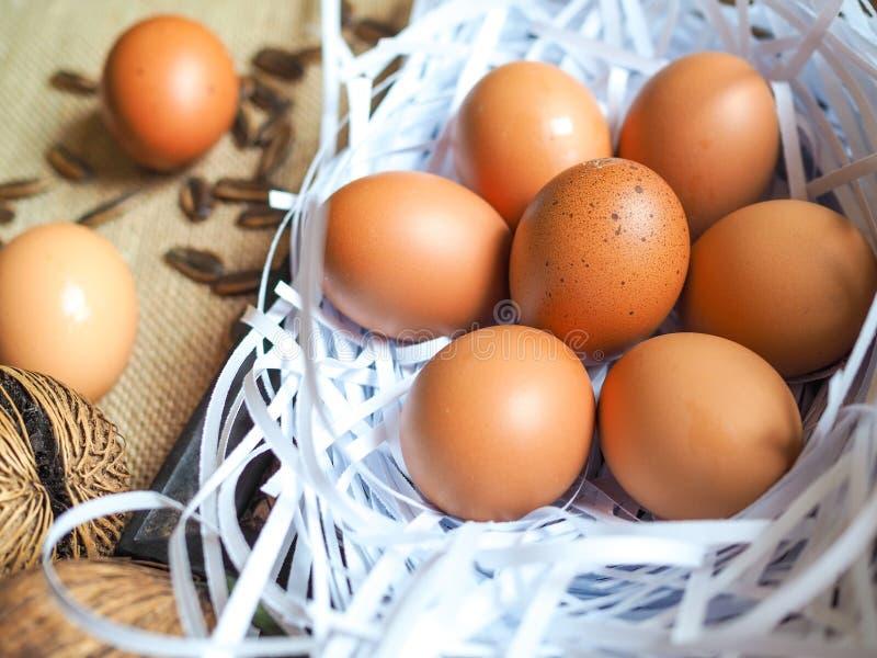 Organic chicken egg on white paper nest stock photos