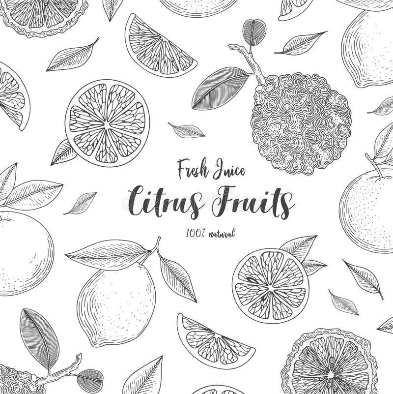 Organic citrus fruit banners. Healthy food. Engraving sketch vintage style. Vegetarian food for design menu, recipes vector illustration