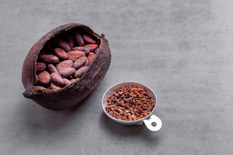 Organic cocoa beans. Ingredient for preparation chocolate royalty free stock images