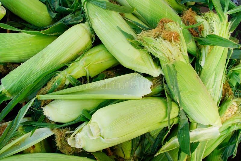 Organic Corn stock image