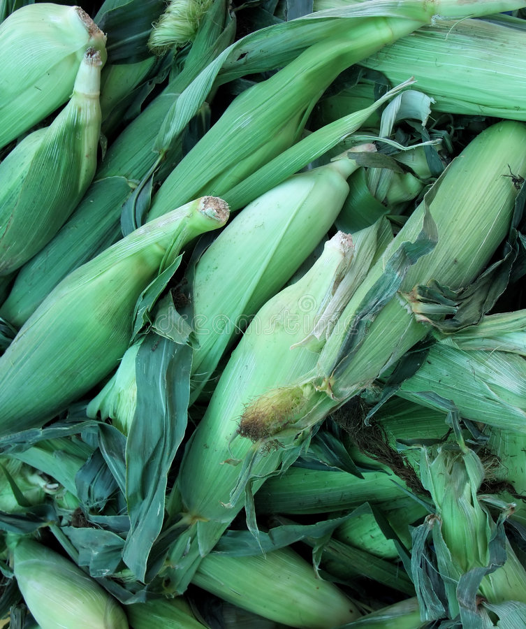 Organic Corn royalty free stock images