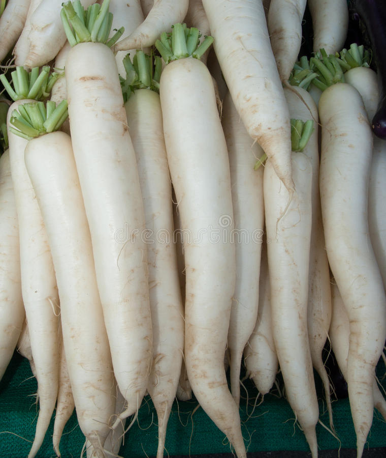 Free Organic Daikon Radishes Royalty Free Stock Photos - 13664548
