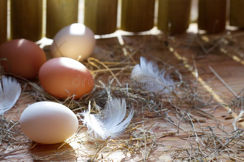 Organic ecological eggs in chicken coop in the morning easter spring abstract background. Closeup stock image